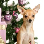 How To Pet Proof Your Home for the Holidays