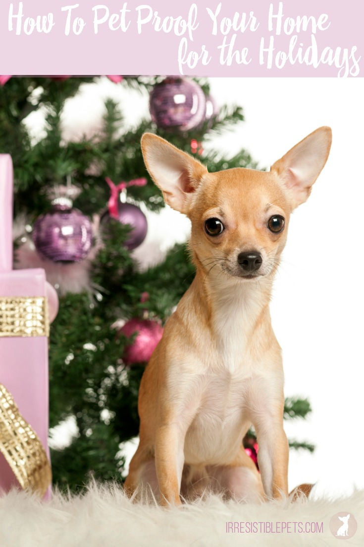 How To Pet Proof Your Home For The Holidays by IrresistiblePets.com