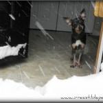 Chuy's Corner – The BIG Christmas Snow!