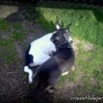 Chuy's Corner – My New Puppy Friend!