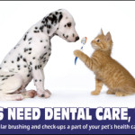 FREE Greenies Coupons for Dental Health Month!