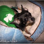 Happy St Patrick's Day from Irresistible Pets