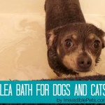 Natural Flea Bath for Dogs and Cats