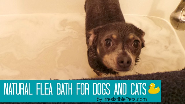 Natural Flea Bath for Dogs and Cats by IrresistiblePets.com