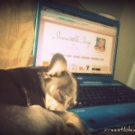 Wordless Wednesday – Chihuahua Blogger