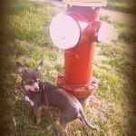 Wordless Wednesday – Fire Dog