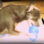 Chuy Chihuahua Recommends . . .Kong!