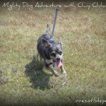Mighty Dog Adventure with Chuy Chihuahua!