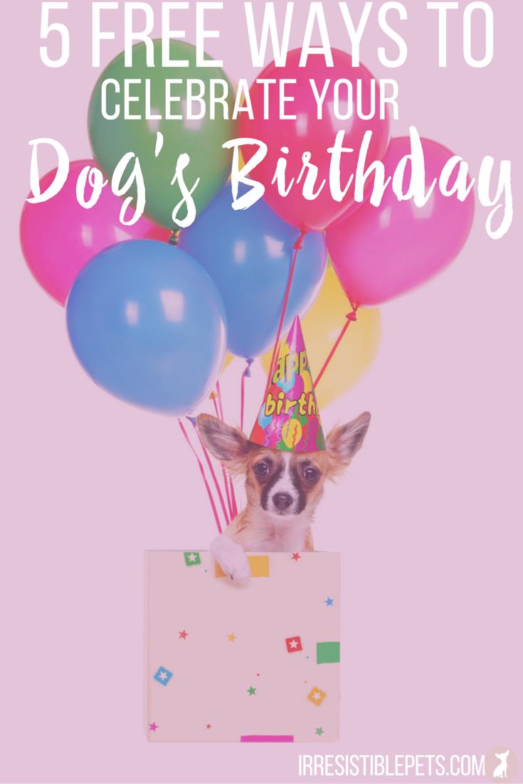 Top 5 Free Ways to Celebrate Your Dog's Birthday