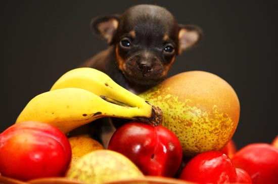 healthy fruits for dogs mexican fruit
