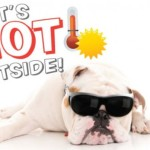 Summer Pet Health & Safety Resources