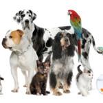 Hurricane Irene Pet Resources