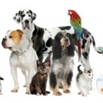 Hurricane Irene Pet Resources