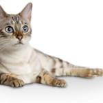 Free Sample: Royal Canin Cat Food and $2 Coupon