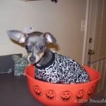 Wordless Wednesday– First Halloween Flashbacks
