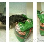 Review and Giveaway–By Nature Dog Food