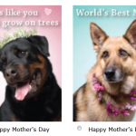 Free Mother's Day eCards for Pet Mama's