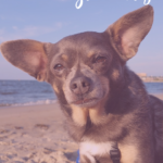 5 Free Things to Do with Your Dog This Summer