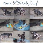 Happy 3rd Birthday Chuy!