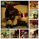 Chuy's 3rd Birthday