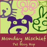 Monday Mischief – Chuy and Mimi