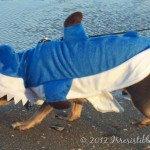 Wordless Wednesday – Shark Week!