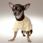 Discounted Designer Dogwear from Piccolo on LeLe Pets