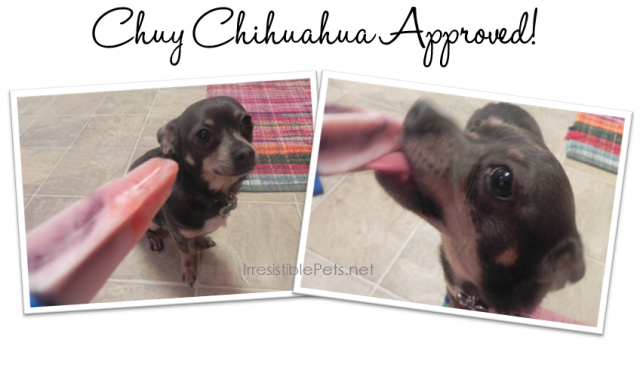 DIY Patriotic Pupsicles - Chuy Chihuahua Approved