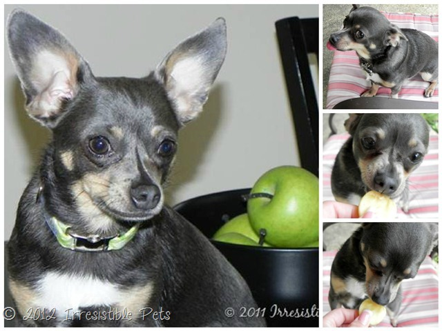 DIY Apple Peanut Butter Dog Treats - Chuy Chihuahua
