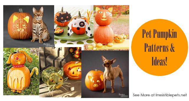 31 Days of Howloween - Pet Pumpkin Patterns and Ideas