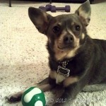 Wordless Wednesday {Wanna Play Fetch?}