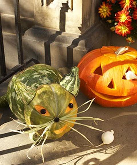 DIY Pet Pumpkin Carving Ideas - Gourdy Cat