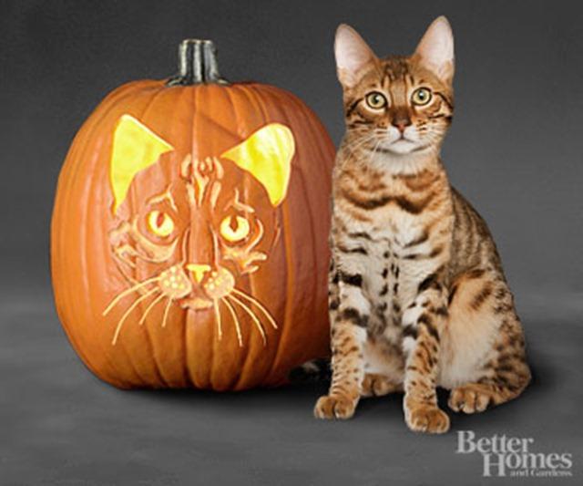 Free Pumpkin Carving Patterns - Cats
