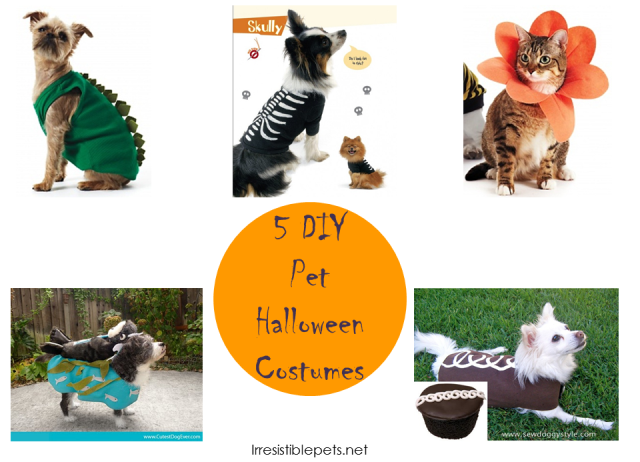 Irresistible-Pets-5-DIY-Pet-Halloween-Costumes