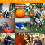 Howl-O-Ween {Pet Friendly Fall Activities}
