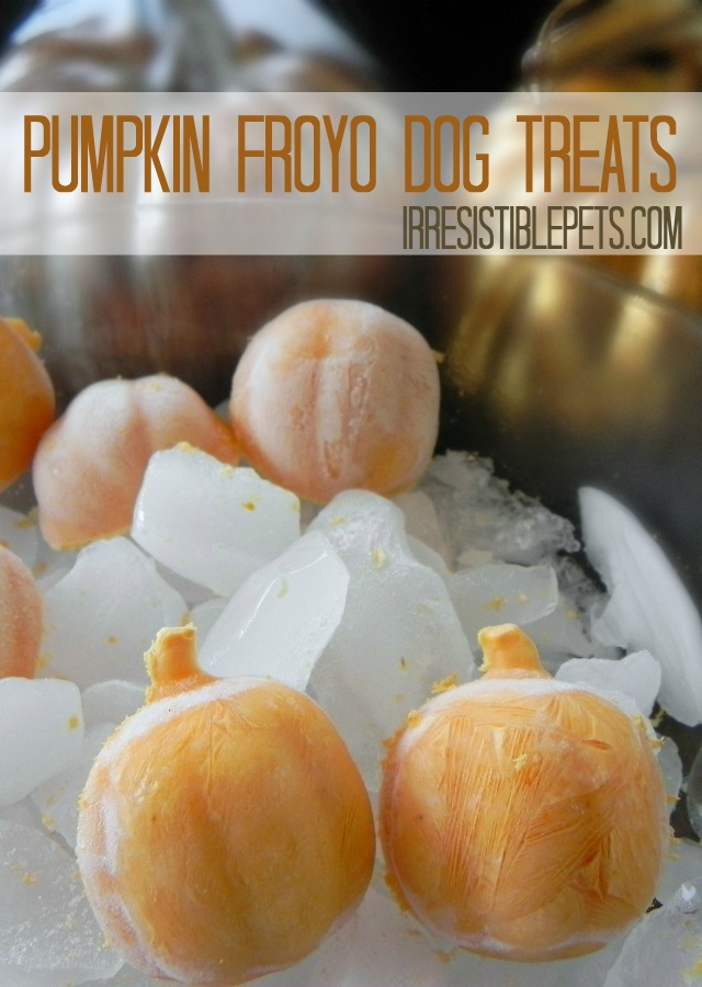 Pumpkin FroYo Dog Treats by IrresistiblePets.com