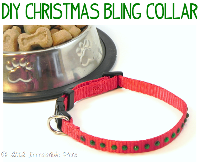 DIY Christmas Dog Collar from IrresistiblePets.com