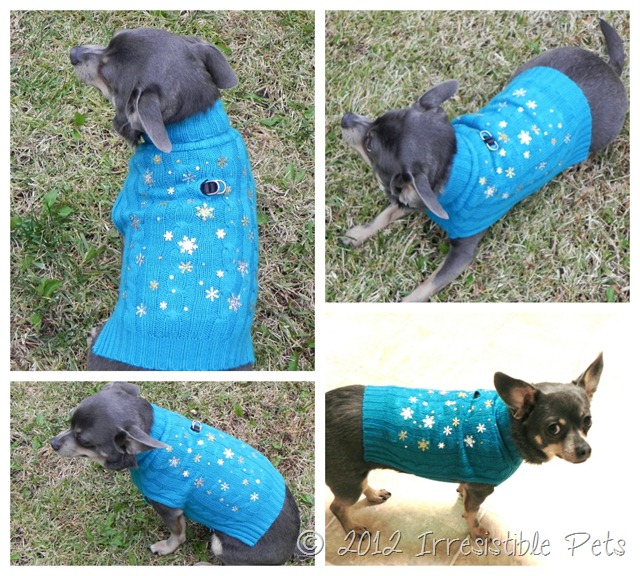 DIY Winter Wonderland Dog Sweater via IrresistiblePets.net - Chuy Chihuahua