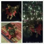 Chuy's 3rd Christmas