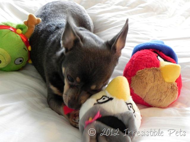 Hartz Angry Birds Winter Pet Toys