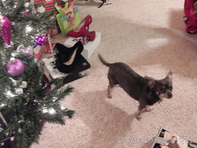 Chuy Chihuahua High Heels
