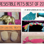 Irresistible Pets Best of 2012