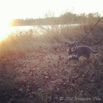 Wordless Wednesday {Walking in the Leaves}