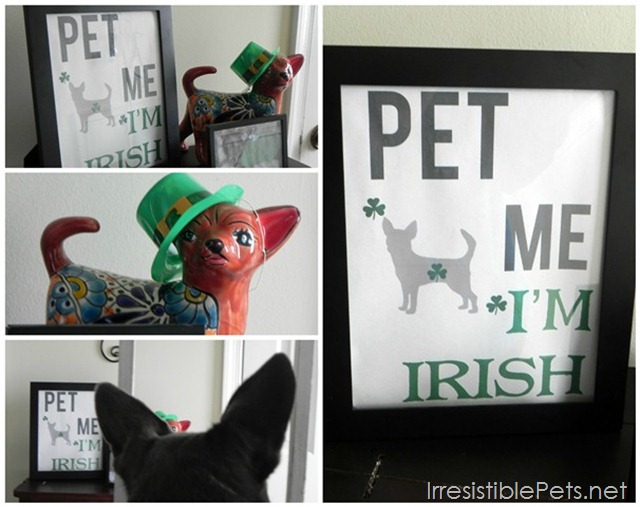Pet Me I'm Irish