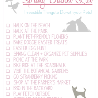 Spring-Bucket-List-for-Pets-from-IrresistiblePets.co_.png