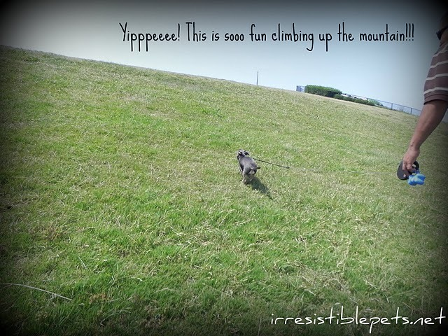 Chuy at Mt Trashmore