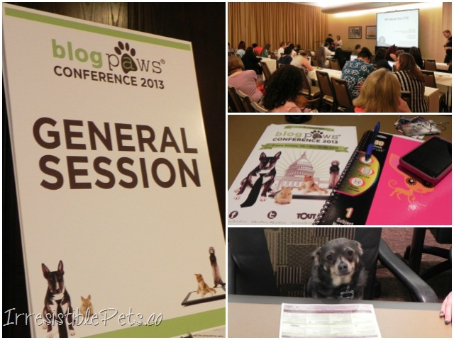 BlogPaws Workshops