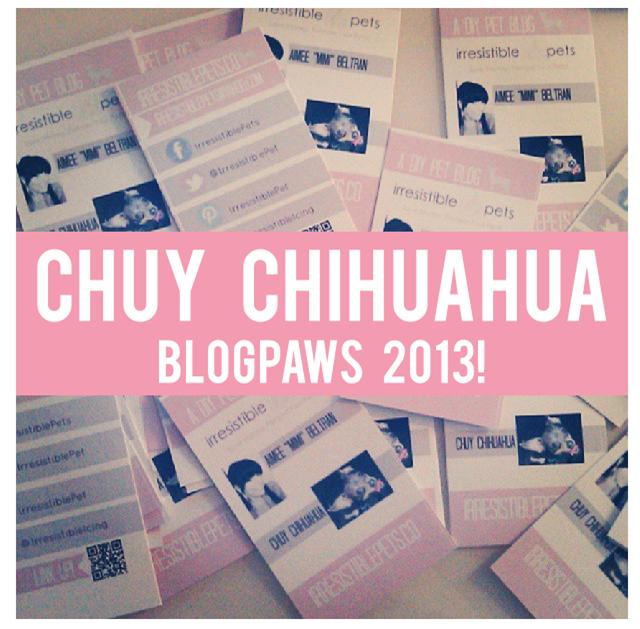 Chuy Chihuahua at BlogPaws 2013