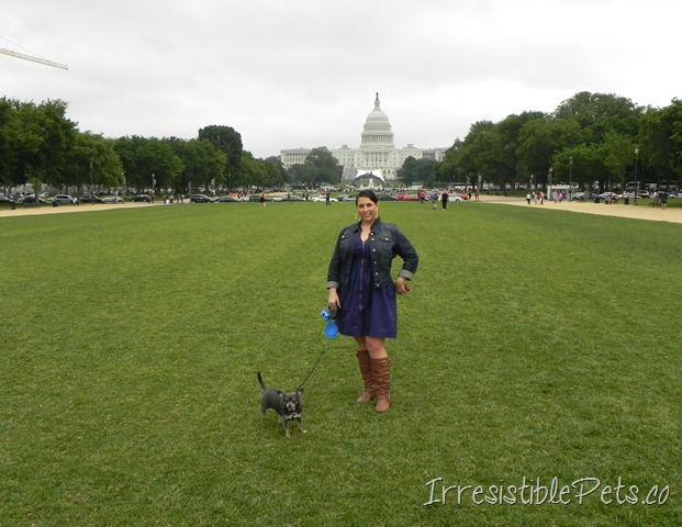 Chuy Chihuahua and Aimee in DC