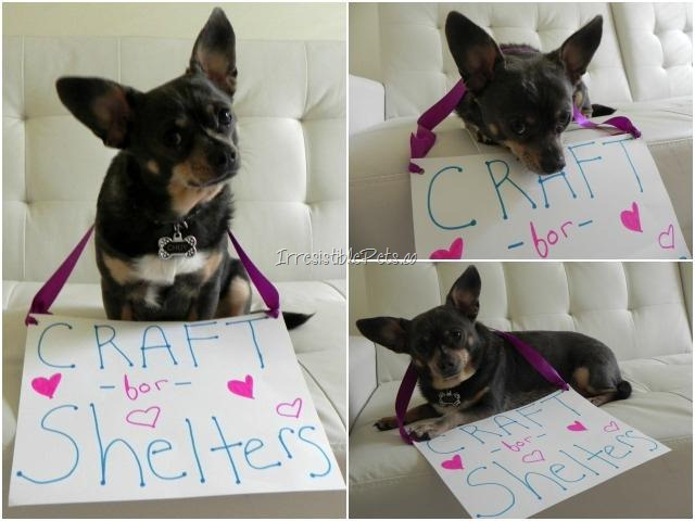 Craft for Shelters with Chuy Chihuahua